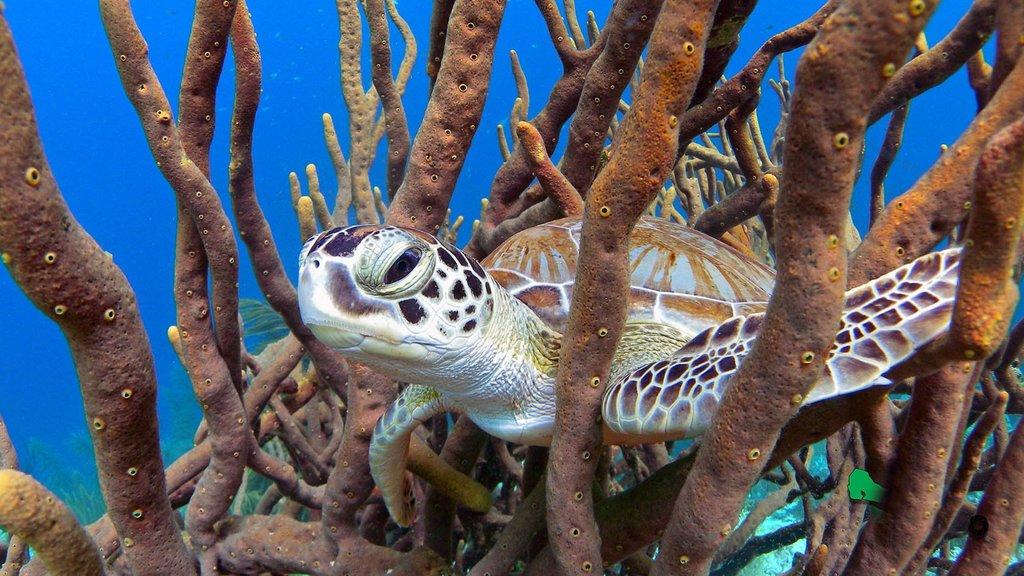 Bonaire mostrando vida marina