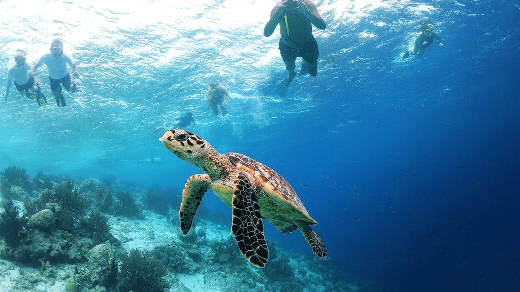 Bonaire que incluye snorkeling, vida marina y vistas generales de la costa