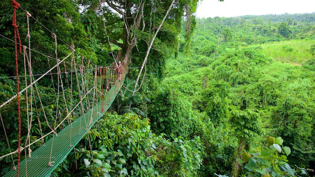 Port Vila which includes rainforest