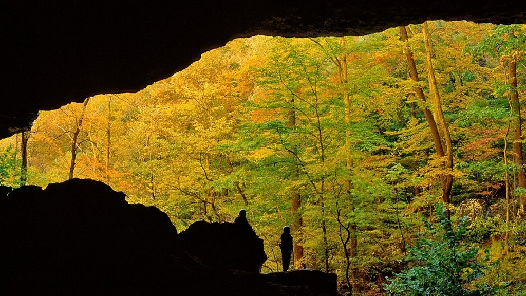 Buffalo National River que incluye hojas de otoño y bosques