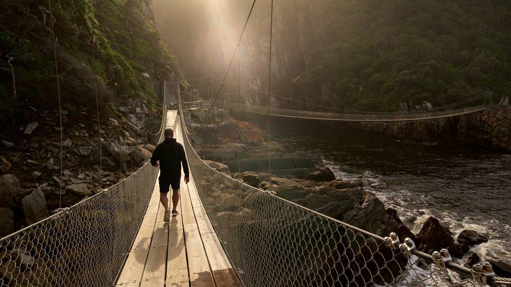 Tsitsikamma National Park featuring a bridge as well as an individual male