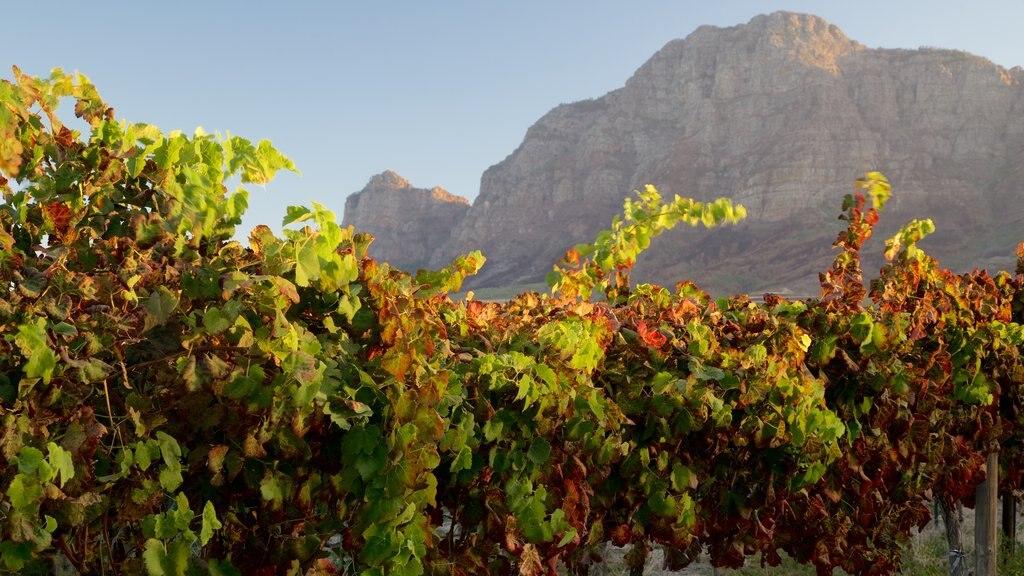 Vrede en Lust Winery