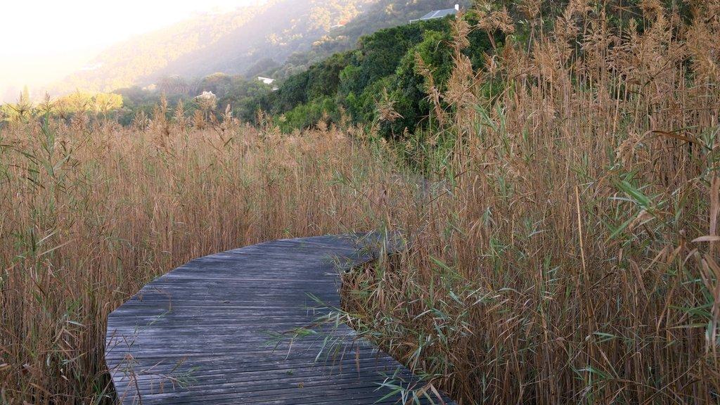 Parque Nacional Wilderness que incluye una puesta de sol y escenas tranquilas