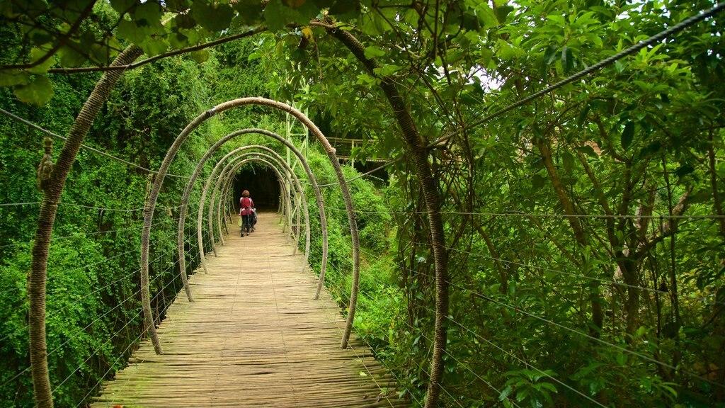 Birds of Eden which includes a bridge