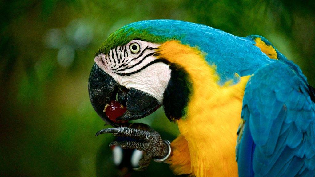 Birds of Eden featuring bird life