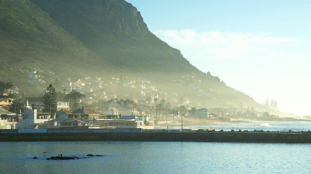 Kalk Bay showing general coastal views, a bay or harbor and a coastal town