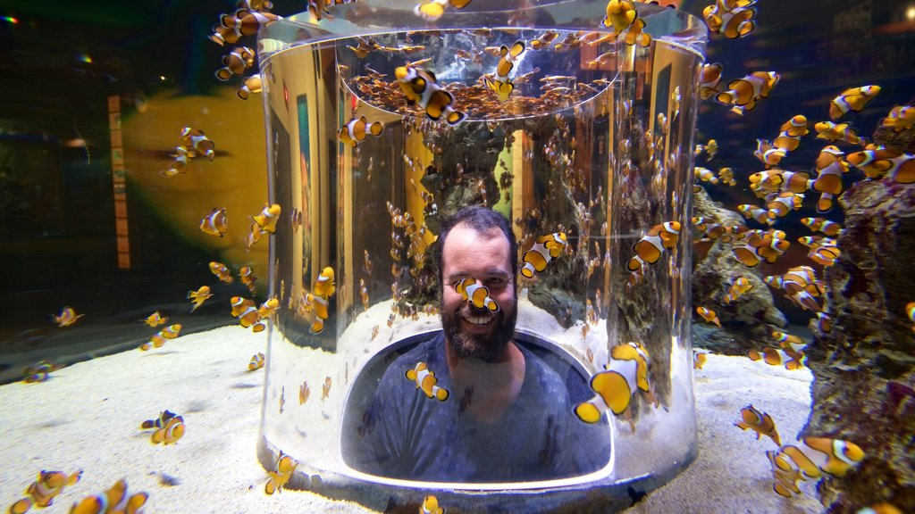 Two Oceans Aquarium featuring marine life as well as an individual male