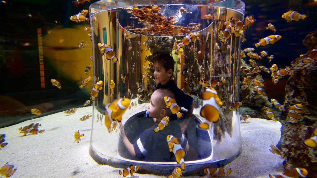 Two Oceans Aquarium which includes marine life as well as children
