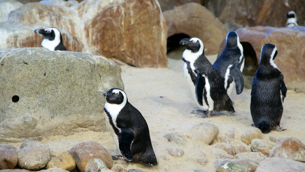 Two Oceans Aquarium which includes cuddly or friendly animals, marine life and bird life