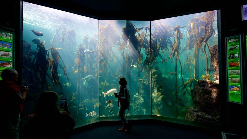 Two Oceans Aquarium which includes marine life