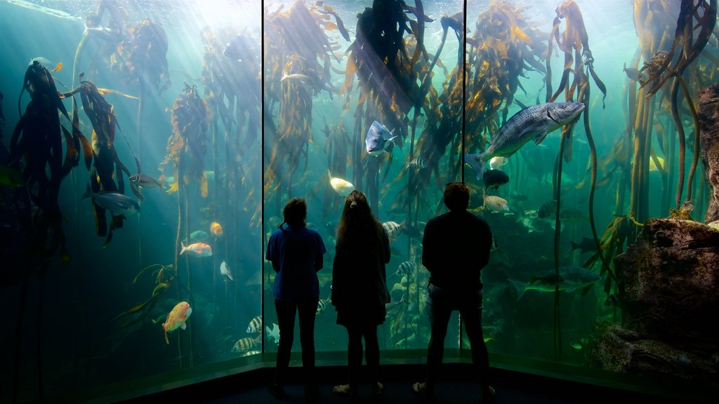 Two Oceans Aquarium which includes marine life as well as a small group of people