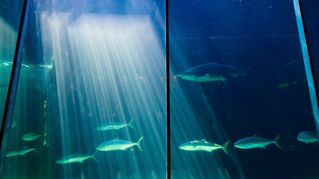 Two Oceans Aquarium showing marine life