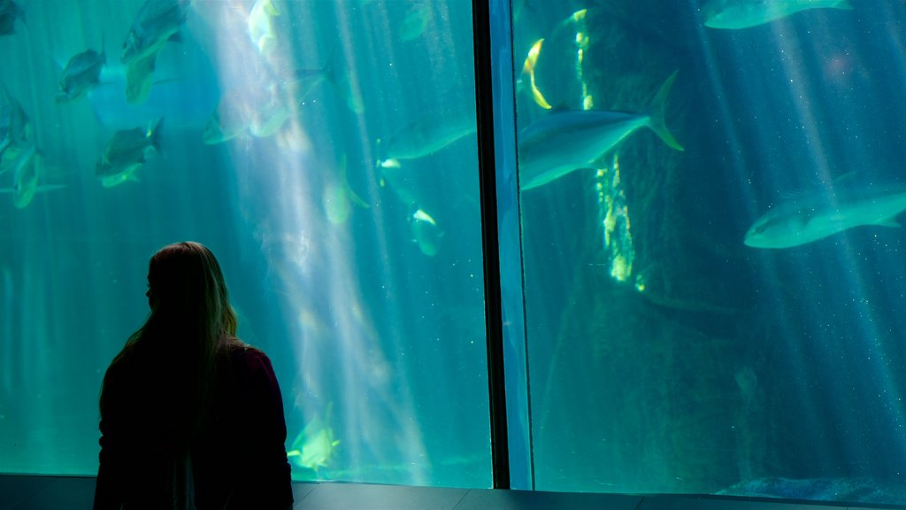 Two Oceans Aquarium showing marine life as well as an individual femail