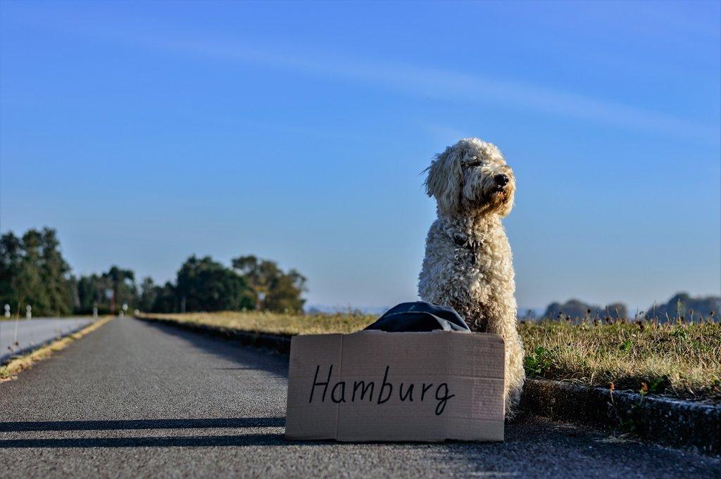 hamburg_hitcher.jpg?1587998066