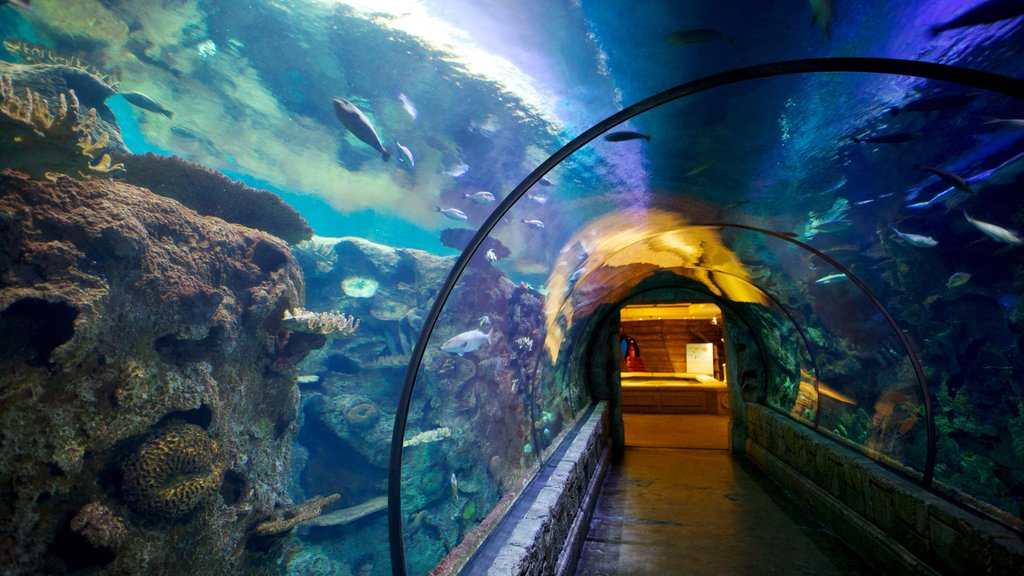 Shark Reef at Mandalay Bay featuring marine life, interior views and colorful reefs