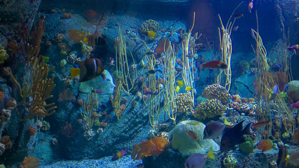 Aquarium of the Pacific featuring marine life and coral