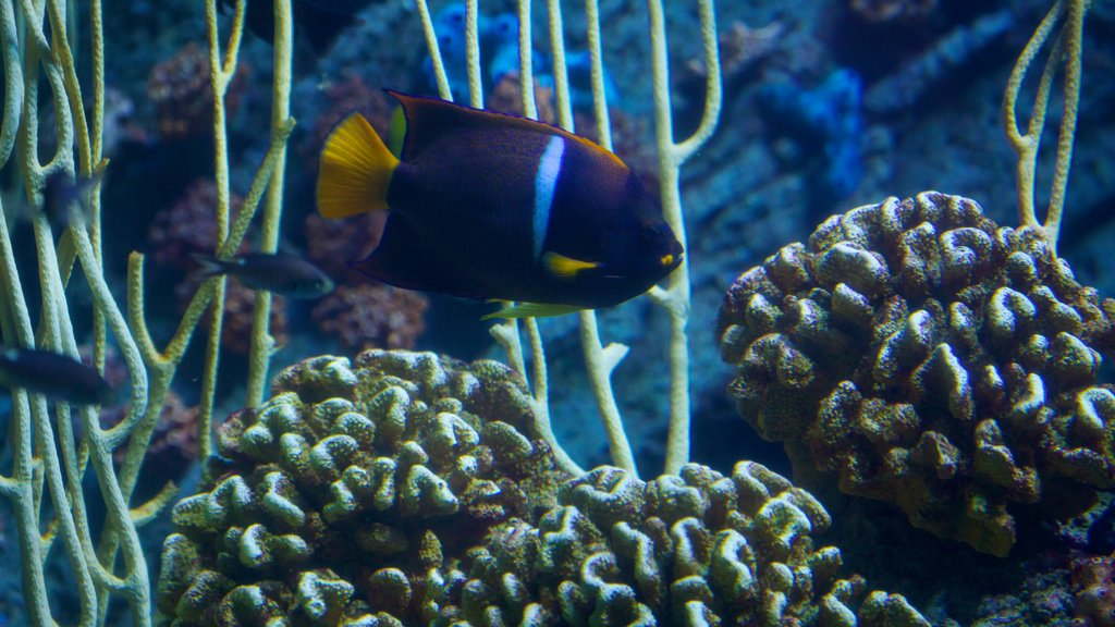 Aquarium of the Pacific showing marine life and colorful reefs