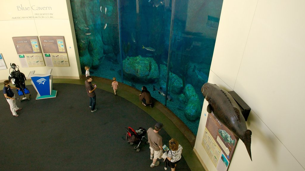 Aquarium of the Pacific which includes interior views and marine life