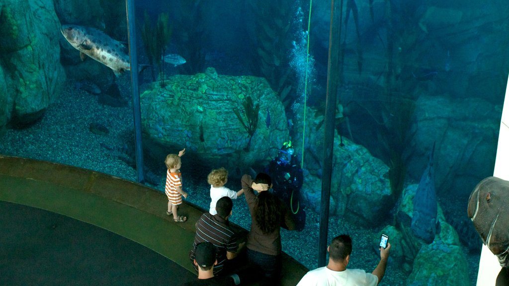 Aquarium of the Pacific showing interior views and marine life