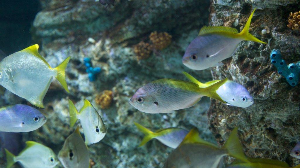 Aquarium of the Pacific featuring marine life