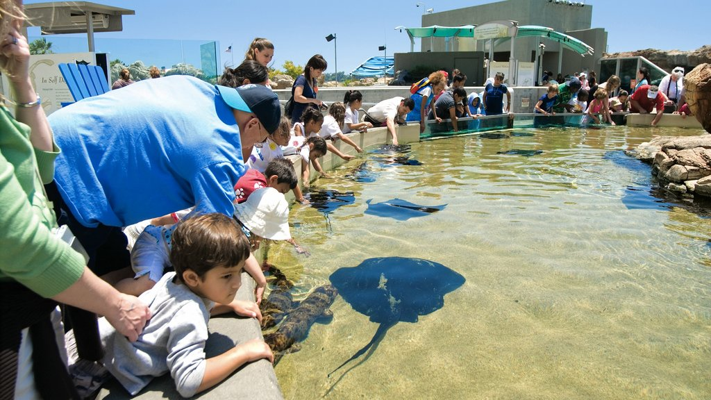 Aquarium of the Pacific which includes a fountain, a pool and marine life