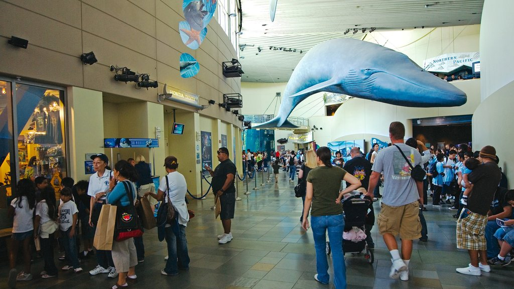 Aquarium of the Pacific showing marine life and interior views as well as a large group of people