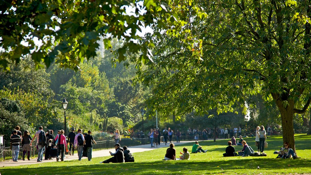 St. James Park which includes a park as well as a large group of people
