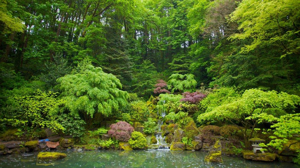 Jardín Japonés de Portland mostrando un jardín y vistas de paisajes