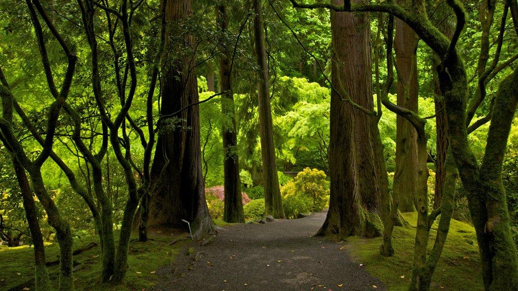 Jardín Japonés de Portland ofreciendo un jardín, escenas forestales y vistas de paisajes