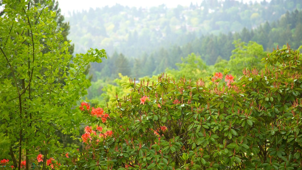 Pittock Mansion which includes flowers, forest scenes and landscape views