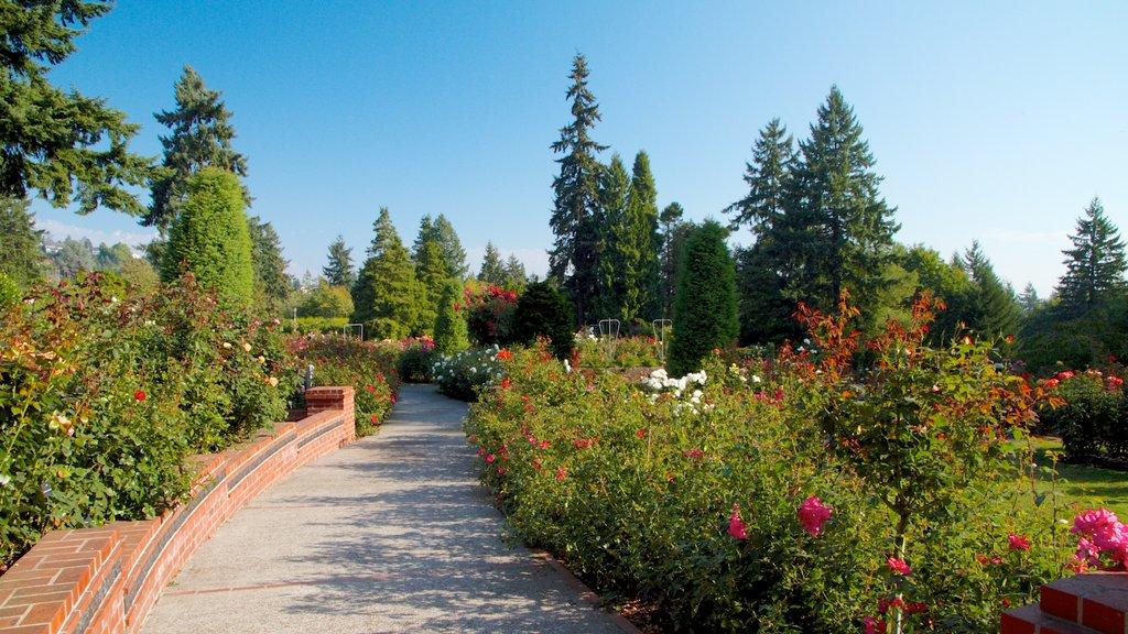 International Rose Test Garden showing flowers, landscape views and a park