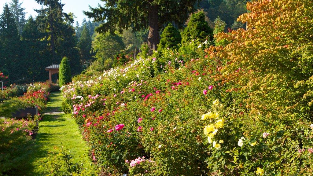 International Rose Test Garden showing flowers, a garden and landscape views