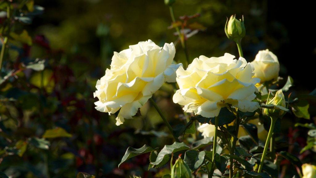 International Rose Test Garden featuring a park and flowers