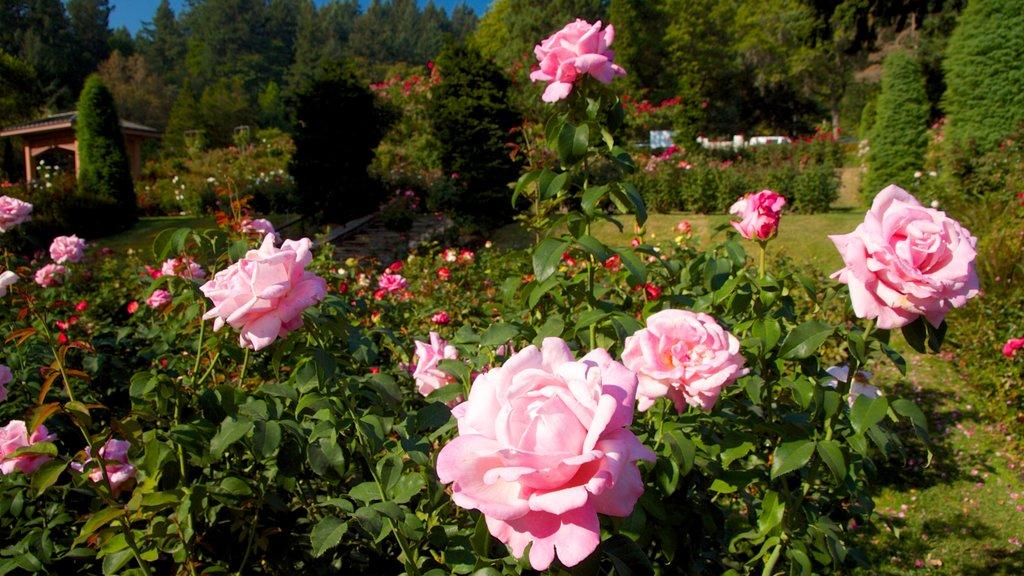 International Rose Test Garden showing landscape views, flowers and a garden