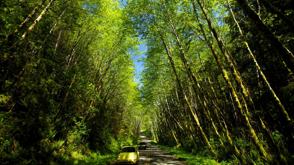 Olympic National Park showing landscape views and forests