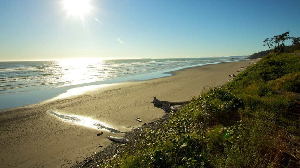 Olympic National Park featuring landscape views and a sandy beach