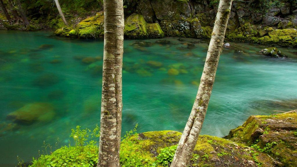 Mount Rainier National Park showing landscape views