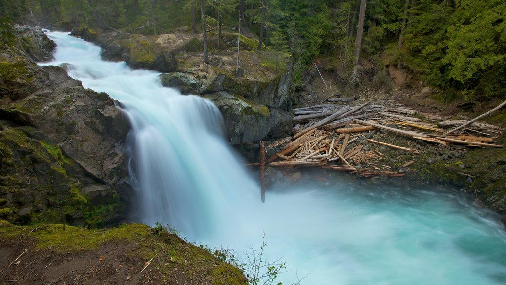 Mount Rainier National Park which includes a river or creek, landscape views and a cascade
