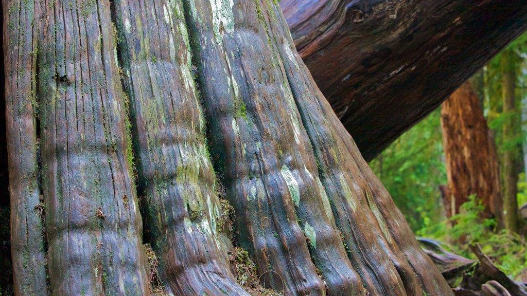 Parque Nacional del Monte Rainier mostrando escenas forestales