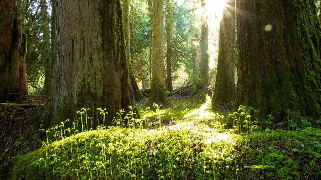 Parque Nacional del Monte Rainier ofreciendo vistas de paisajes y bosques