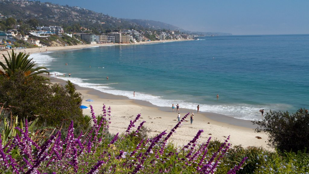 Laguna Beach which includes a coastal town, flowers and a beach
