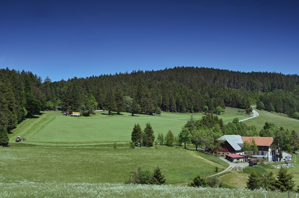 schwarzwald_landschaft.jpg?1590169827