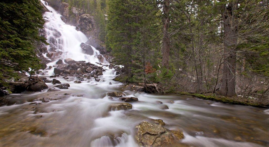 Parque Nacional Grand Teton que incluye escenas forestales, un río o arroyo y una cascada
