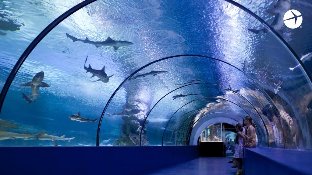 Zoom_Aquarium.jpg?1590526501