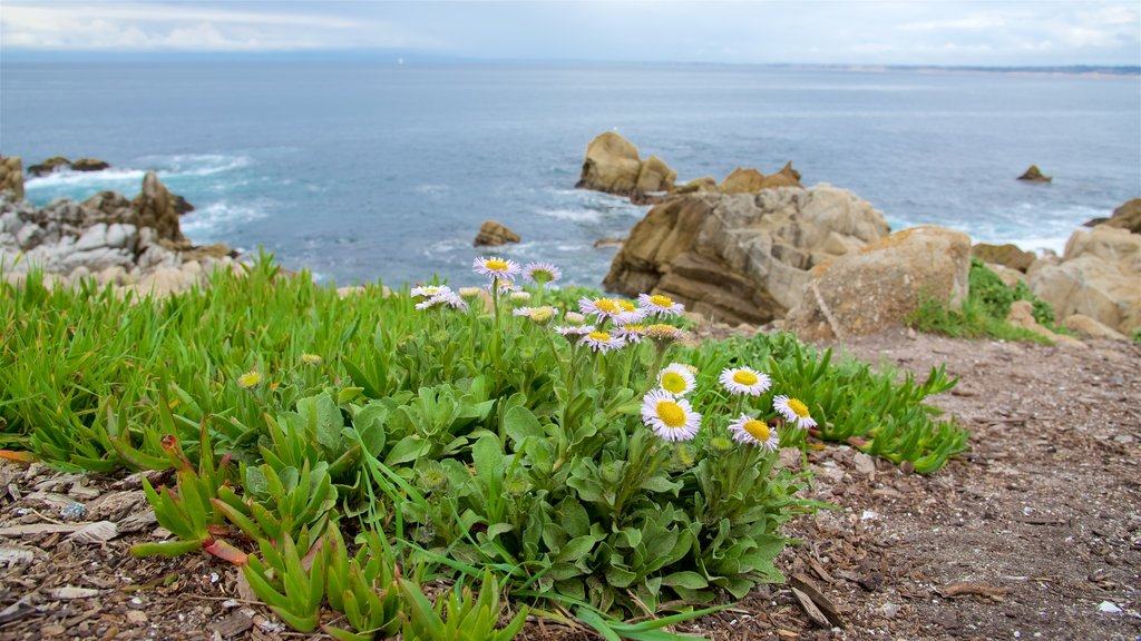 Pacific Grove which includes flowers and rugged coastline