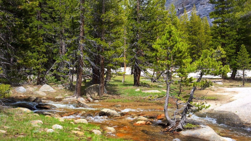 Tuolumne Meadows which includes tranquil scenes and a river or creek