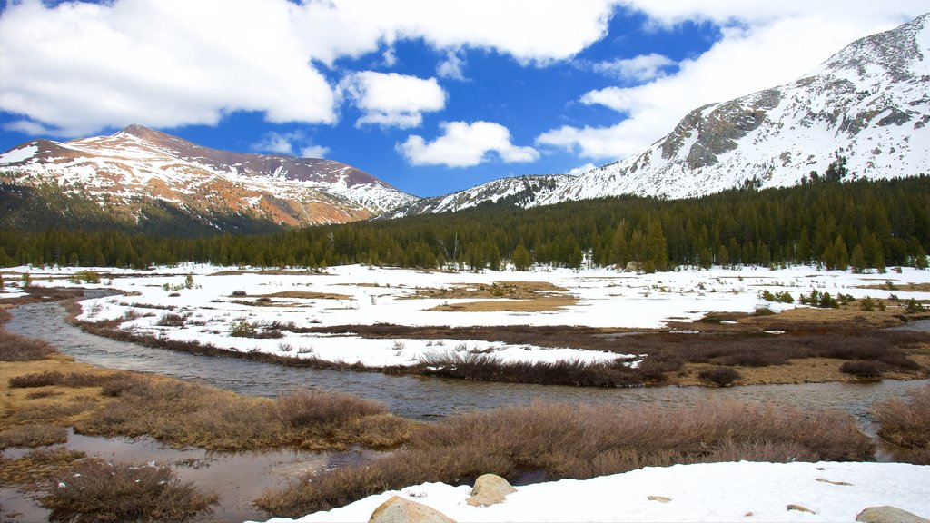 Tuolumne Meadows showing snow and tranquil scenes