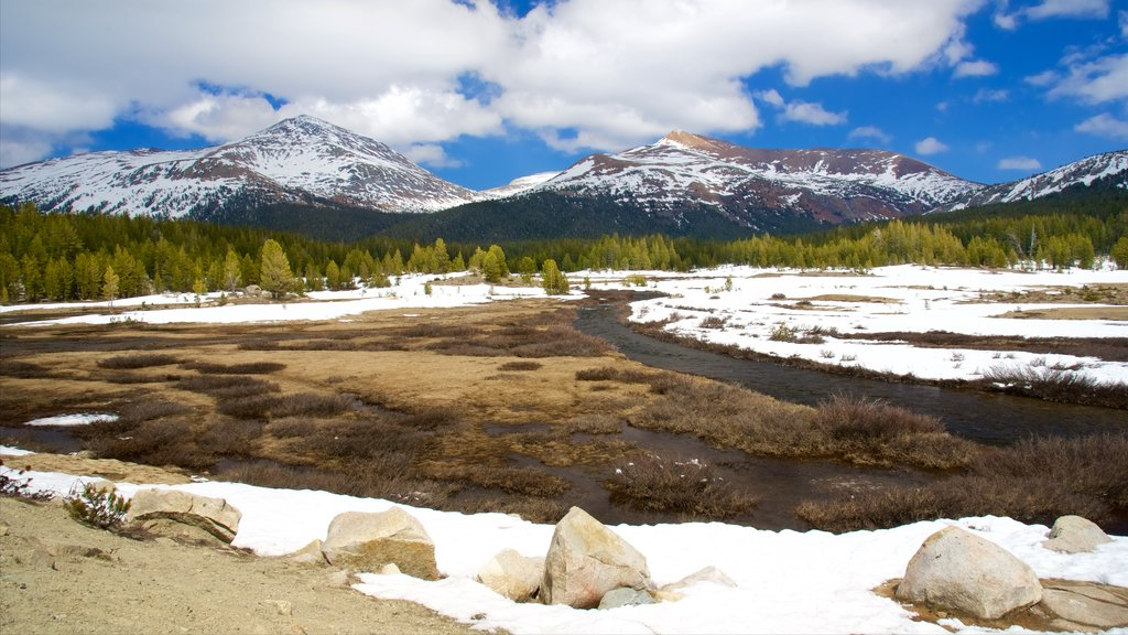 Tuolumne Meadows featuring snow and tranquil scenes