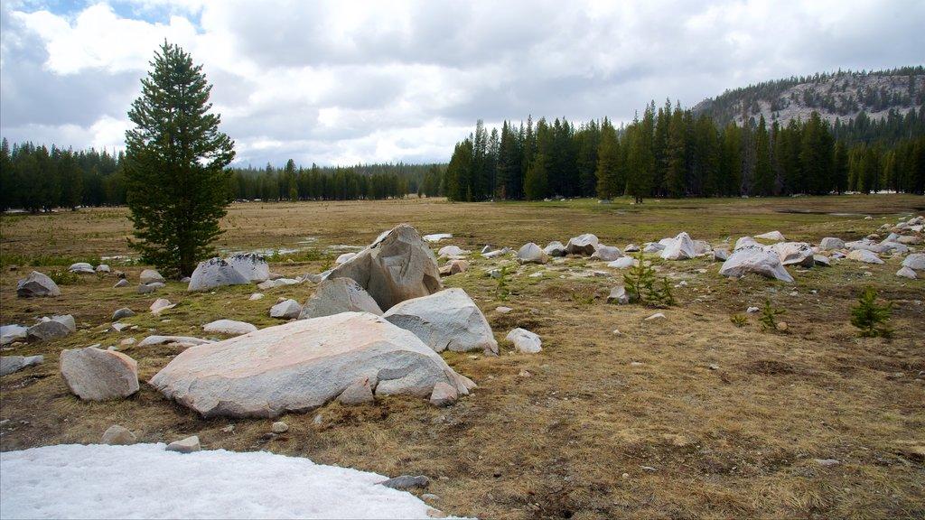 Tuolumne Meadows featuring tranquil scenes