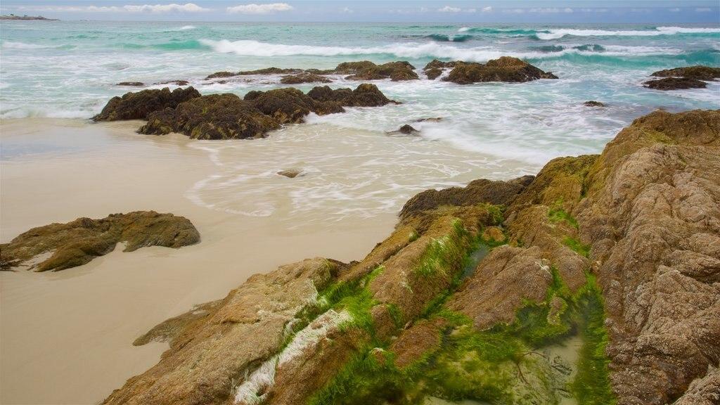Asilomar State Beach featuring rugged coastline and a beach